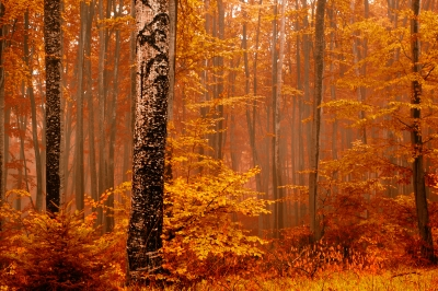 "Courtesy freedigitalphotos.net, ""red autumn forest"" by Evgeni Dinev"